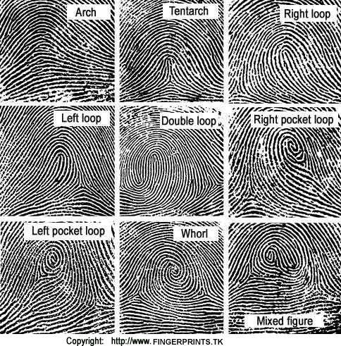 Fingerprint Science Project for Kids