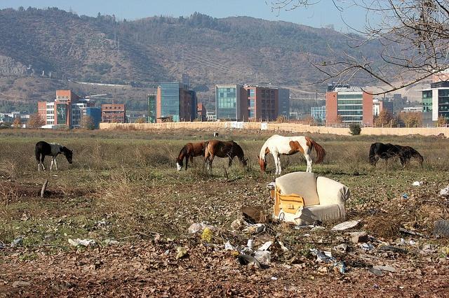 Chilean horses outside Ciudad Empresarial, Santiago