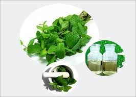 AOS Products is a prominent manufacturer, wholesale suppliers company of Spearmint Oil in India. We export superior quality and natural Spearmint Oil and its products to all over the globe.