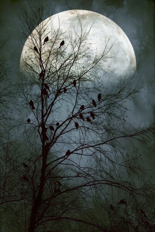 Blackbirds Singing in the Dead of Night by John Rivera.