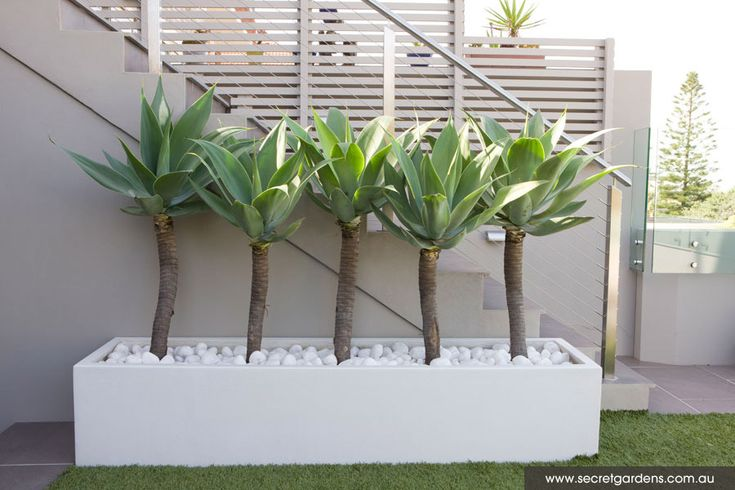 Garden Design | Tamarama
