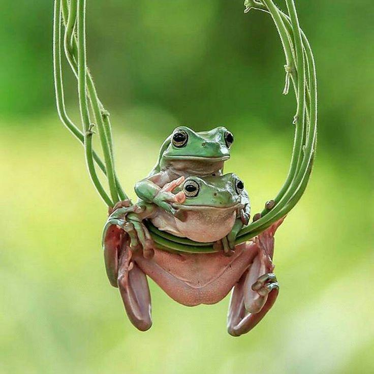 We'll be swinging.....