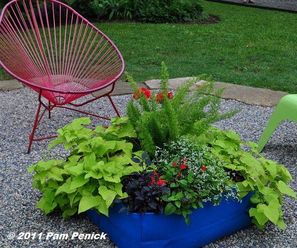 Best 20 Lotus Garden Ideas On Pinterest Lotus Flower