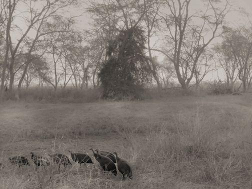 Somewhere in Botswana. Photograhed by Anna Mizgajska
