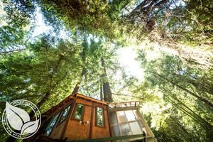 Glamping Tree Houses for rent