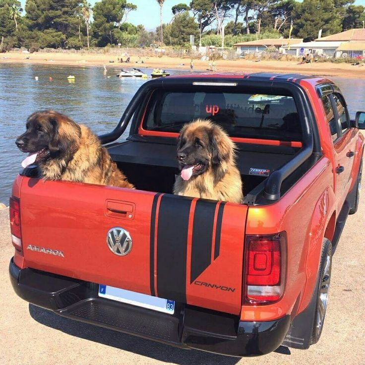 """VW Amarok """"Canyon"""" version: Tessera4x4 """"SOT-ROLL"""" series, aluminum roller lid shutter combined with beautiful dogs. Thank you for this great photo Mr. Marc."""