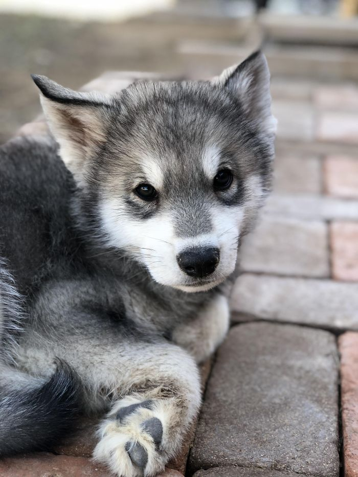 379 Of The Cutest Puppies Ever Cute Animals Beautiful Dogs