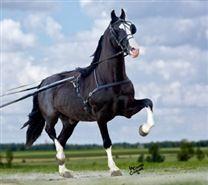 Horse Auctions | David Carson Farms & Auction Services Ltd.