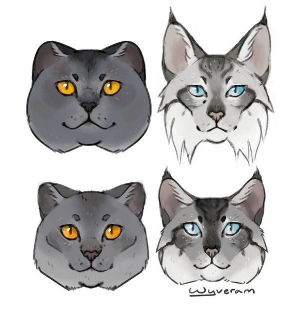 Warrior Cats Guided Reading Level