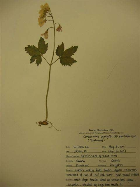 All For Students: Create a best Harberium or herbarium sheet for botany