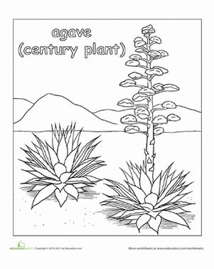 agave plant coloring page agave plant and worksheets. Black Bedroom Furniture Sets. Home Design Ideas