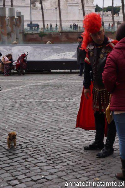 Idąc dalej w stronę schodów Hiszpańskich napotkaliśmy najmniejszego psa jakiego widziałam w życiu. biegał za rzymianinem, który czekał w okolicy Koloseum na turystów chcących sobie zrobić z nim zdjęcie. Wszyscy na placu byli nim zachwyceni i to mu robili zdjecie a nie rzymianinowi  :D