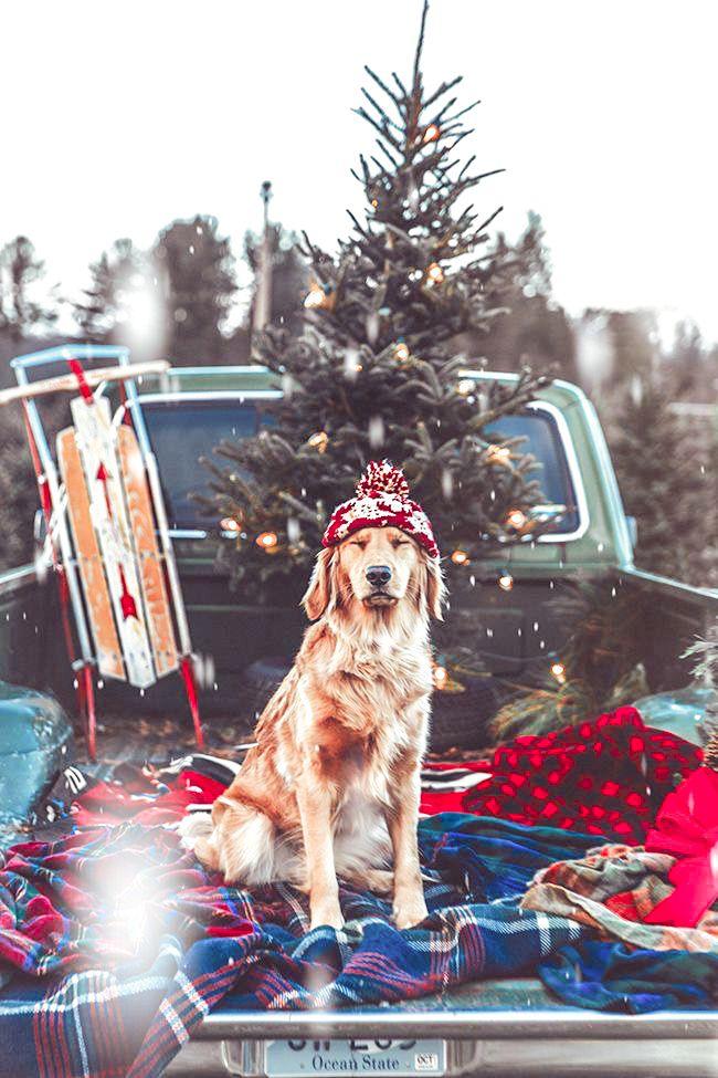 Winter Presets Lightroom Presets Winter Lightroom Mobile Etsy Christmas Dog Photos With Dog Dog Photography