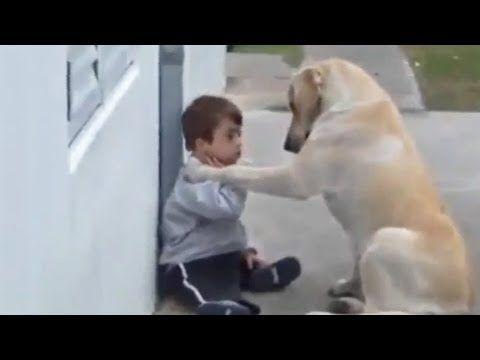 Hund kümmert sich liebevoll um kleinen Jungen mit Down-Syndrom - YouTube