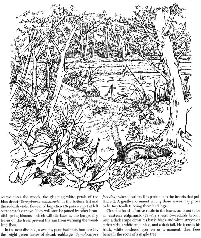 nature walk coloring pages - photo#29