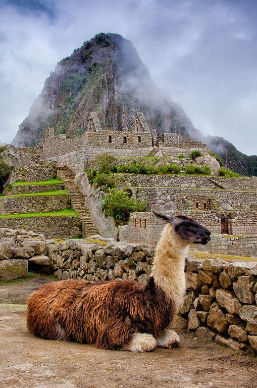 Llama take a break at Machu Picchu, Peru.