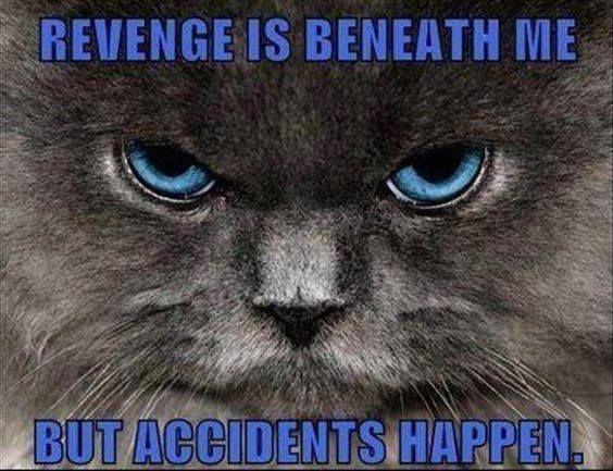 10 Completely Insane Laws Involving Animals Cat behavior