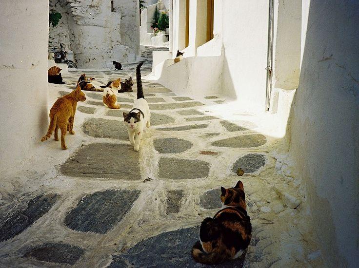 SworldのFacebookページでは、記事の更新のお知らせの他に「Photo of the Day」と題して毎日1枚世界のワクワクドキドキな写真を紹介しています。2013年7月1日~7月6日は歩いてみたいギリシャの小道特集です。