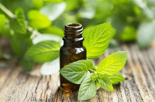 essential oil peppermint leaves m