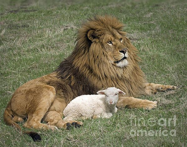 Title:Lion And Lamb - Artist:Robert Weiman