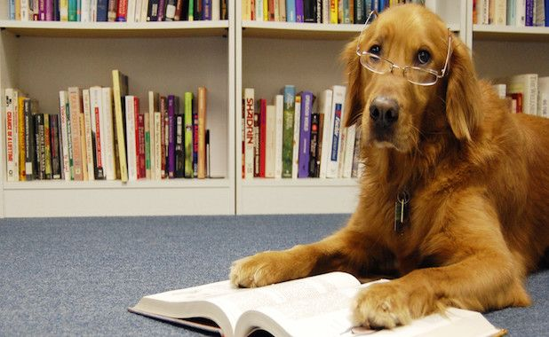 literary dog names