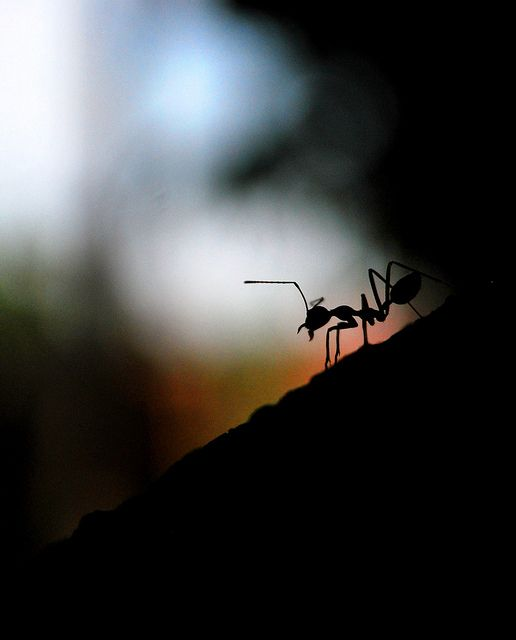 Silhouette Photography   ants3, via Flickr.