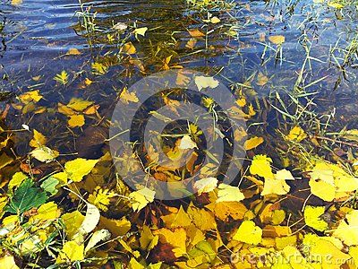 Leaves and generic vegetation on water, autumn water small waves background.