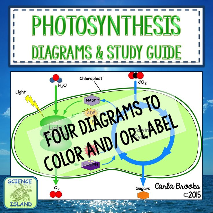 Quiz & Worksheet - Limits of Photosynthesis | Study.com