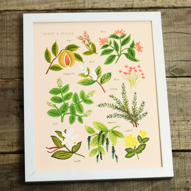 Peach Herbs & Spices 8x10 Art Print