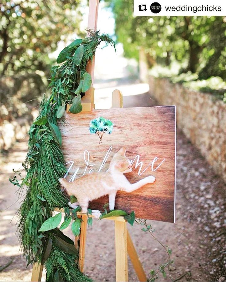 #Repost @weddingchicks (@get_repost)  Paws down the CUTEST wedding photo ever Photography by @Sotiris_Tsakanikas   Coordinator and stylist @anjieofu_only_for_you_events #cat #kitten #wedding #meow #cats #kitty #cute #weddingchicks #sotiristsakanikas #weddingphotography #photographer #film