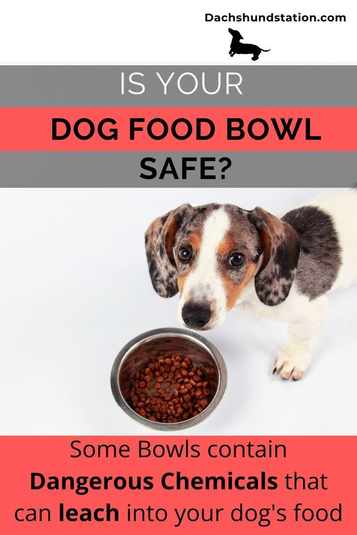 Best Slow Feeder Bowls For Dachshunds New 2020 Dog Food Bowls