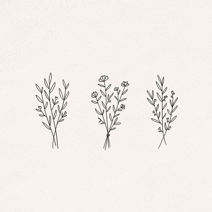 delicate floral plant line drawings – graphics by minna may design – zeynep