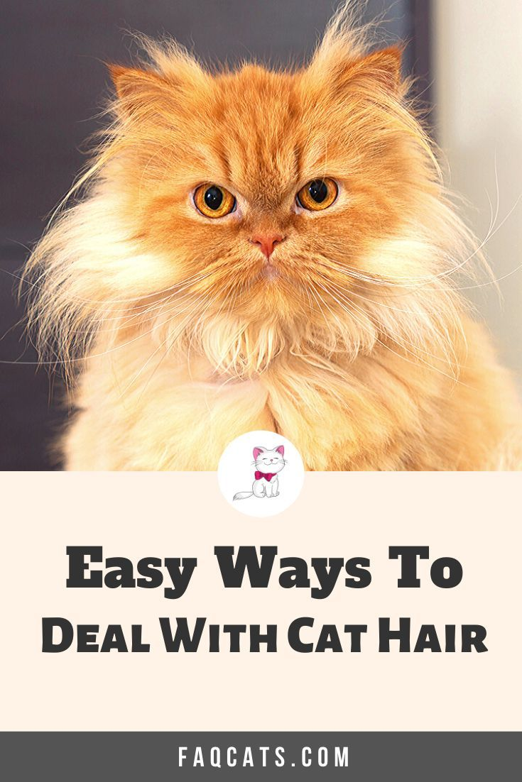 Dealing With Cat Hair And Shedding In 2020 Cat Training Cat Training Kittens All Cat Breeds
