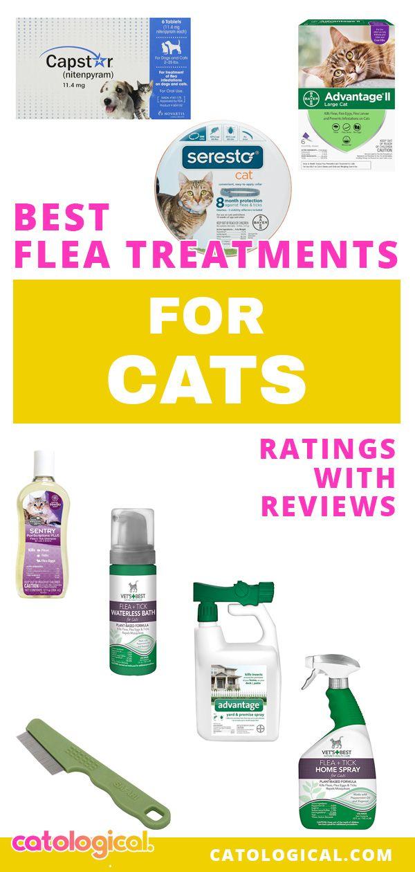 Best Cat Flea Infestation Treatment Symptoms Prevention In The Home Cat Fleas Flea Treatment Fleas