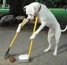Como tirar o cheiro de xixi de cachorro da sua casa? Dicas simples de limpeza que fazem a diferença!