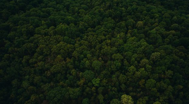 Trees Top View Green Wallpaper Images Photos And Pictures In Full Hd 4k And 8k For Desktop Android Ios Mobi Green Wallpaper Trees Top View View Wallpaper