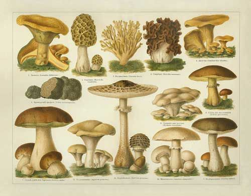 Google Image Result for http://thefifowife.com.au/wp-content/uploads/2012/06/2008_09_26-MushroomSeason.jpg