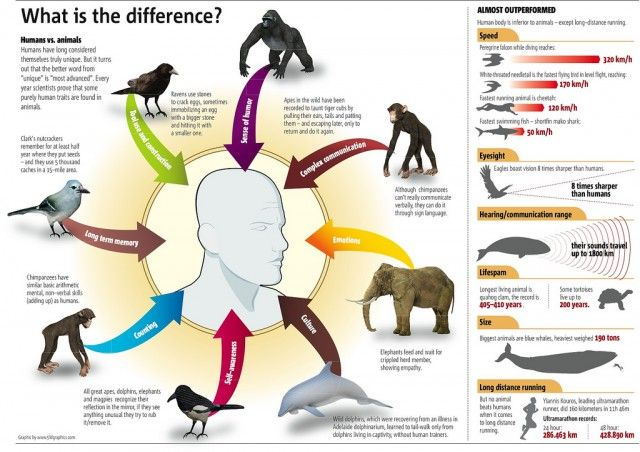 Humans vs. Animals [infographic] | Daily Infographic