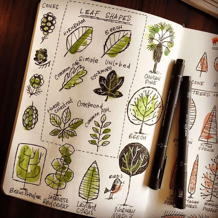 An ongoing collection of my sketchbook ramblings, updated over the year