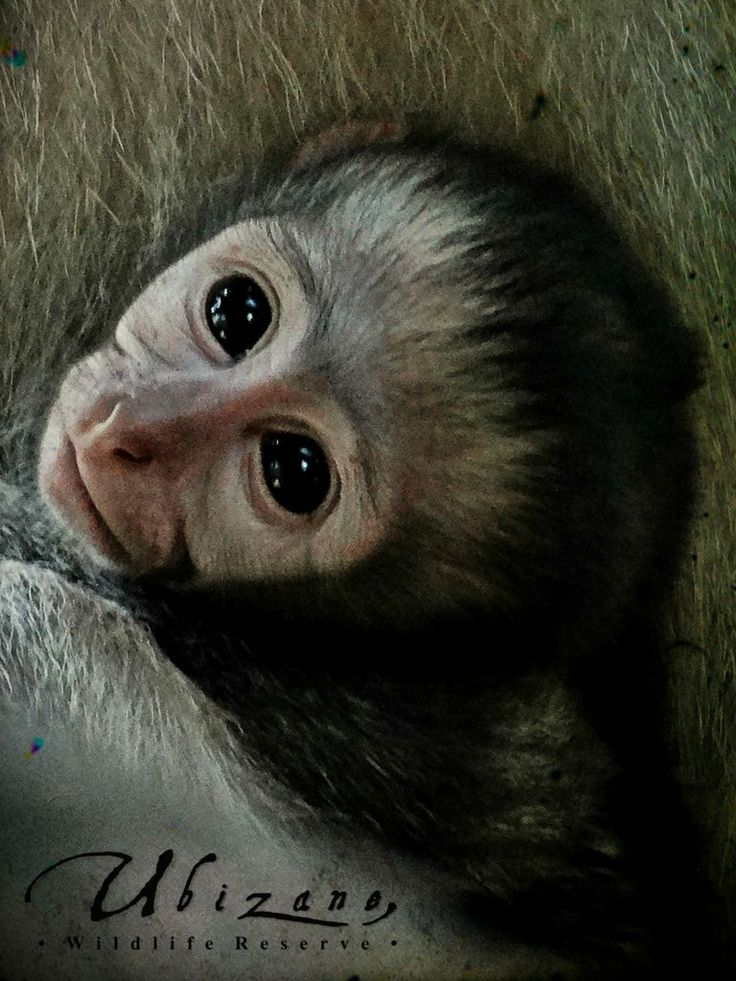 And one more close up on our little monkey:)