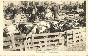 oude foto van de koemarkt die op dinsdag gehouden werd handje klap