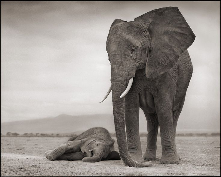 The British photographer Nick Brandt has spent more than 10 years documenting change and challenge in the natural world of East Africa.