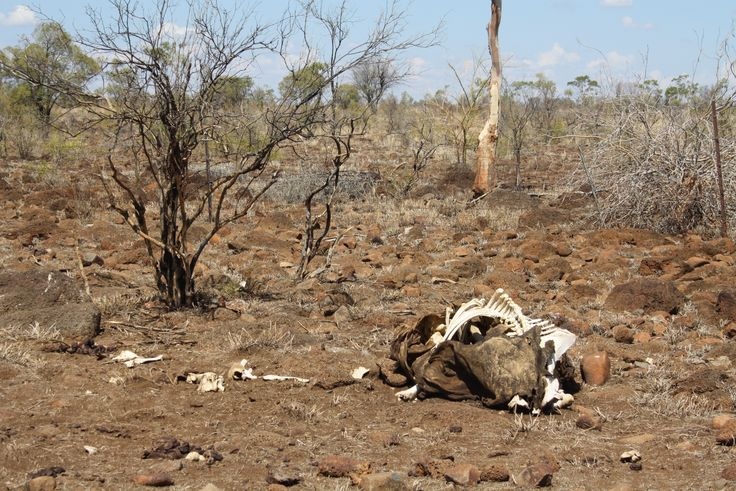 Drought - a harsh reality of outback life.