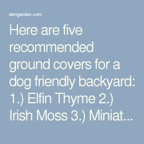 Here are five recommended ground covers for a dog friendly backyard: 1.) Elfin Thyme 2.) Irish Moss 3.) Miniature Stonecrop 4.) Labrador Violet 5.) Snow in Summer Ground covers make great accents to flower beds, between stepping stones, or in rock gardens. They fill in quickly and choke out weeds naturally. Lush ground covers make the ground softer so better for your dog to nap on, or for you to walk on in bare feet!