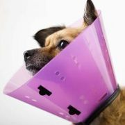 DIY E-Collar plastic cone for dogs (or cats.) Adapt for Custom size, large or small. eHow. Make your own Elizabethan collar for your pet after surgery or for first aid. Cute colors!