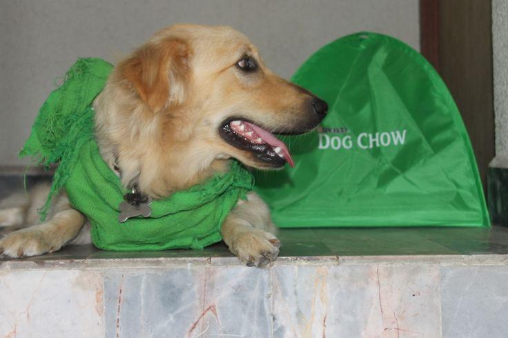 #ecostickers #latasustentable #DogchowCuidaelambiente