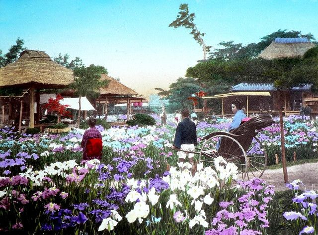 THE HORIKIRI IRIS GARDEN OF TOKYO -- A Pretty Scene in Old Meiji-Era Japan by Okinawa Soba, via Flickr. This is a large-format Salt Print from the 1890s, and similar scenes are common on all sizes and image formats of that time. The garden is still here today.