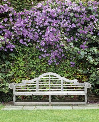 Bench at the head of the Rose Garden at Sissinghurst Castle Garden, with Clematis 'Perle d'Azur' at its best, July