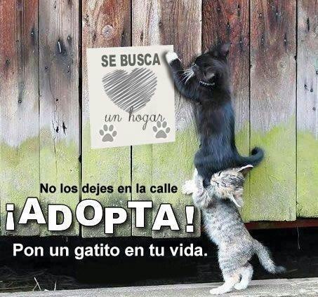 ¡Adopta un gato! No los dejes en la calle. Pon un gatito en tu vida.