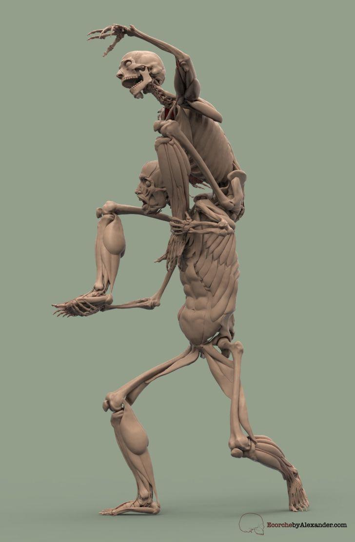 858 besten anatomy Bilder auf Pinterest   Medizin, Menschliche ...
